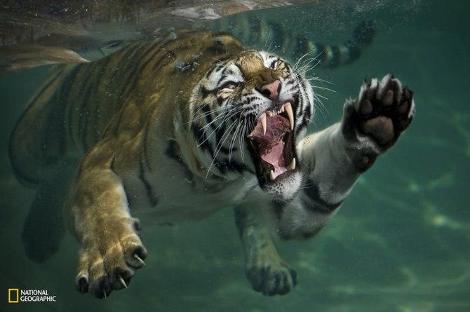 National geografic животные дикие животные